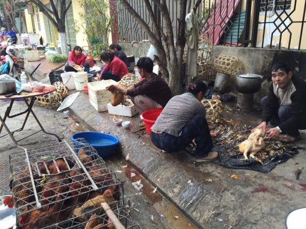 Vặt lông gà vịt bằng tay cần nhiều nhân công