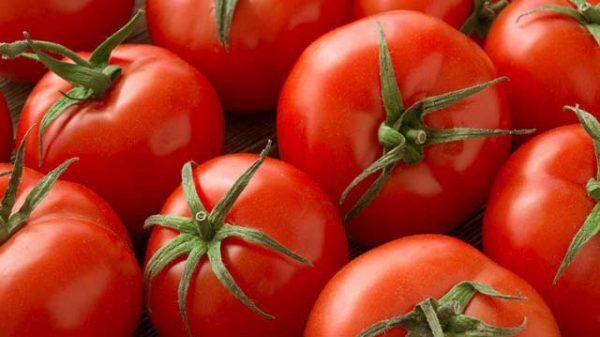 Lưu ý nên chọn những quả cà chua chín mọng nước