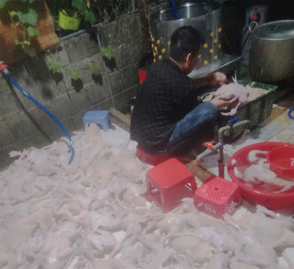 Xử lông vịt hàng trăm con với máy vặt lông