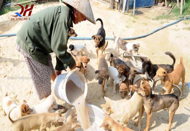Mô hình nuôi chó thương phẩm không còn xa lạ gì với nhiều người kinh doanh