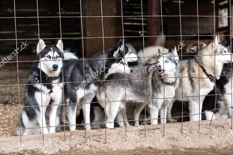 kinh nghiệm mở trại chó