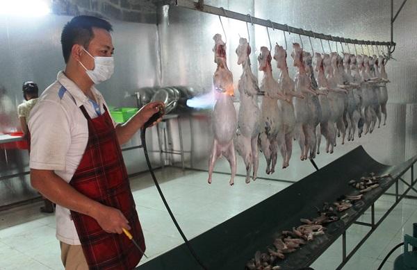 Máy làm lông thỏ Quang Huy tăng năng suất
