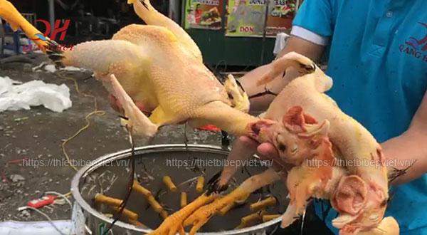 Test thử máy vặt lông gà vịt Quang Huy