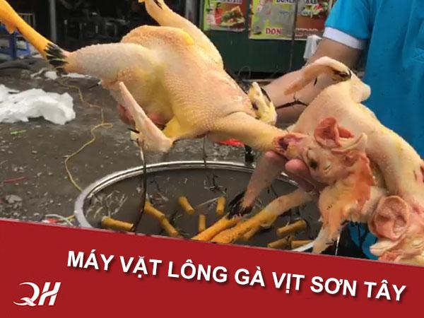 Quang Huy bán máy vặt lông gà vịt Thị Xã Sơn Tây, Hà Nội